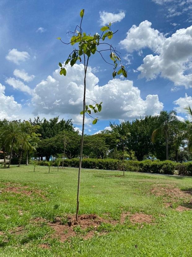 Sustentabilidade: Parque Maeda realiza plantio de quase 1.800 árvores e plantas