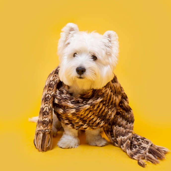 Frio pra cachorro: recomendações de inverno envolvem banhos e atenção com o uso de roupinhas