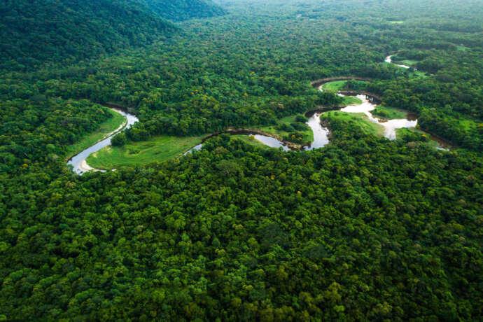 XP faz aporte no Fundo JBS pela Amazônia para apoiar projeto que facilita crédito para bioeconomia