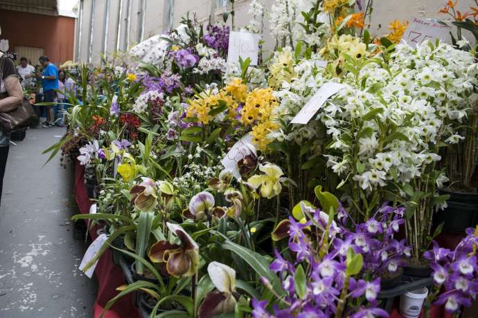 Exposição de Orquídeas em Sorocaba começa nesta sexta-feira
