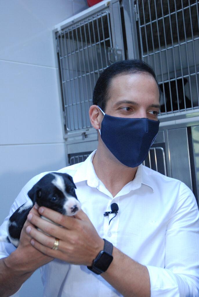 Projeto obriga agressor de animais a pagar tratamento