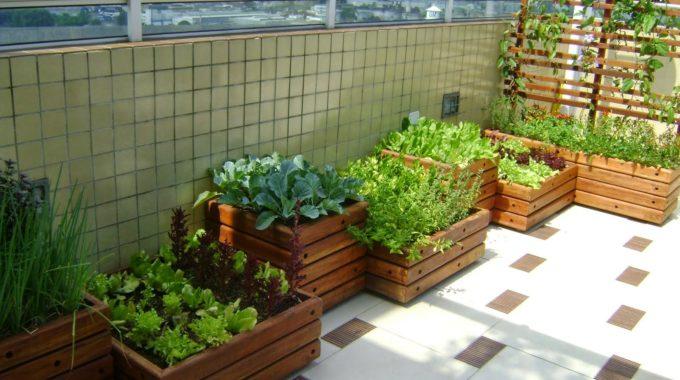 Vida saudável: aprenda a montar uma horta em casa